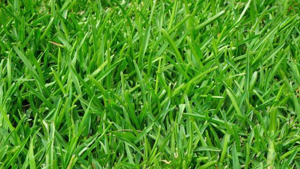 Felino, multe in arrivo per chi non provvede allo sfalcio dell'erba
