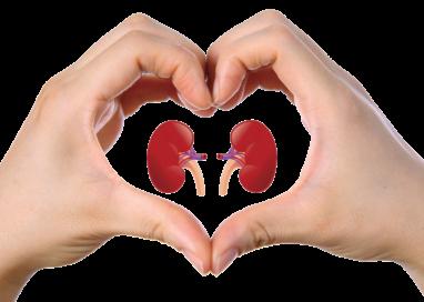 Malattie renali e corretta terapia nutrizionale