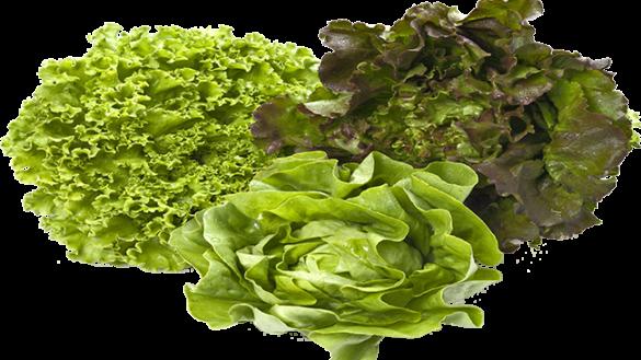 Prodotti di stagione. Facile dire… insalata!
