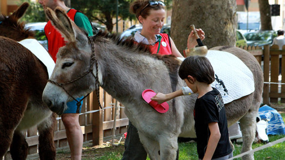 Torna la pet therapy nel giardino dell'Ospedale dei bambini