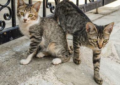 Gattile del Comune esaurito: per un mese non portare animali