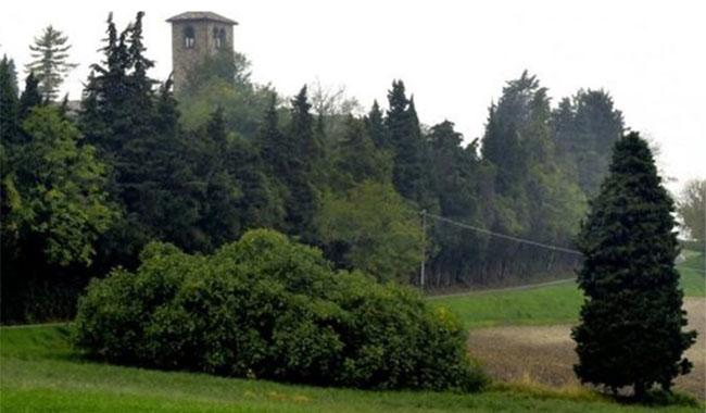 Il fico più antico d'italia si trova nella provincia di Parma…ecco dove