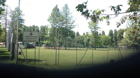 """La denuncia: """"Tre alberi storici abbattuti al parco Ferrari"""""""