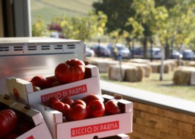 Pomodoro: necessario accordo entro gennaio con prezzi adeguati