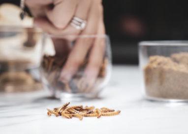 Gli insetti? Il cibo del futuro. Se ne parla giovedì sera al Fidenza Village