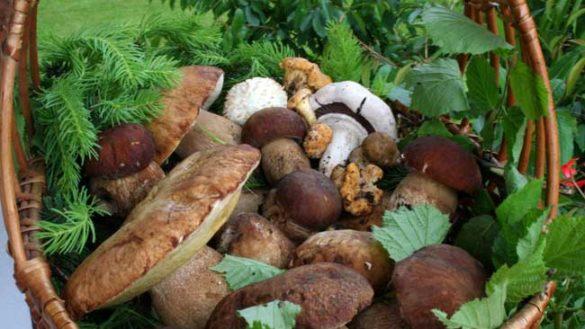 Stagione di funghi, controllare bene la commestibilità