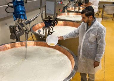A Zibello il primo caseificio al mondo dedicato al Parmigiano Kasher