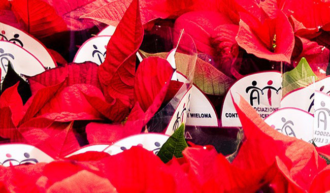 Stelle di Natale per i malati ematologici