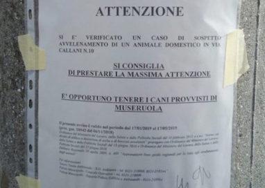 Bocconi avvelenati: segnalazione in zona San Lazzaro