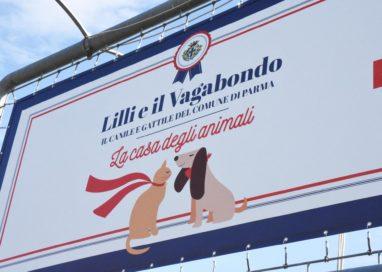 """Canile, il Comune precisa: """"Arrivate due offerte, una idonea"""""""