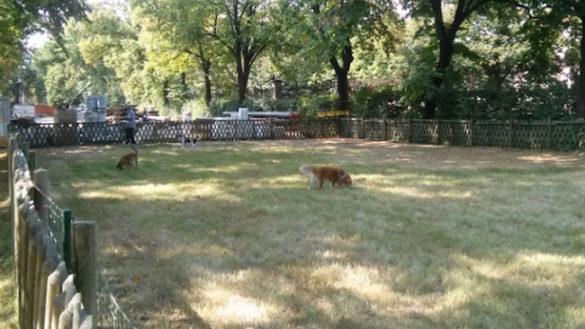 Utilizzo aree cani del Comune, approvato il disciplinare di utilizzo