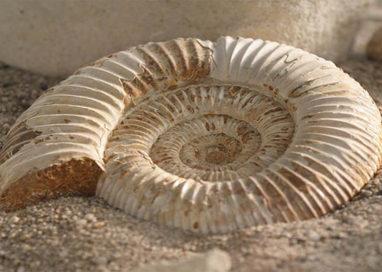 Rinvenuto fossile di frutto in zona Medesano-Sant'Andrea Bagni