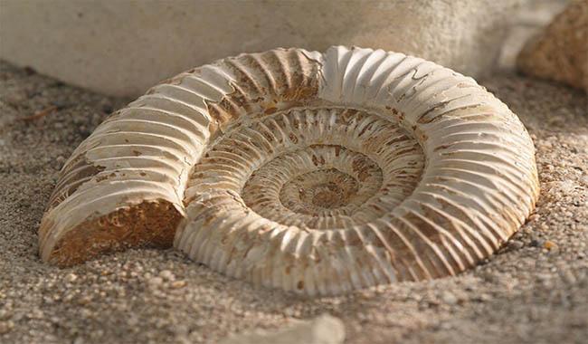 tipi di datazione fossile Calgary Senior siti di incontri