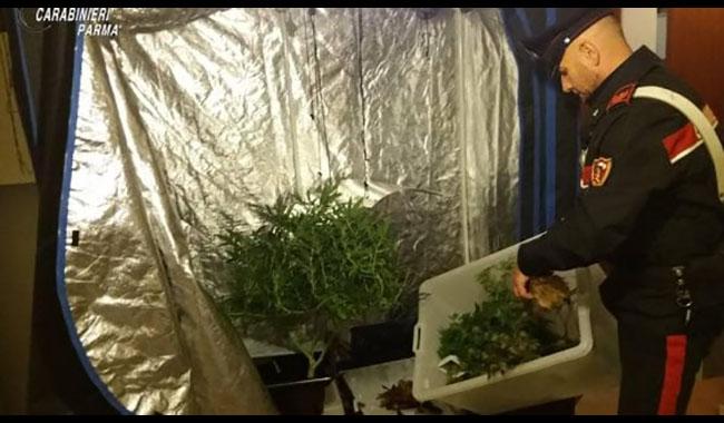 Arrestato studente 22enne: sorpreso con 500 grammi marijuana