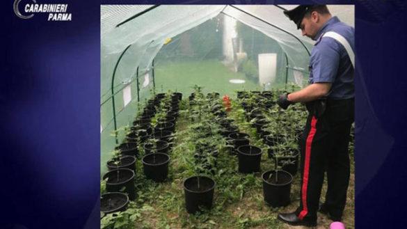 Piantagione marijuana via Langhirano: denunciato parmigiano