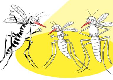 Zanzare ed insetti, ecco come difendersi dalle punture!Guarda il Video