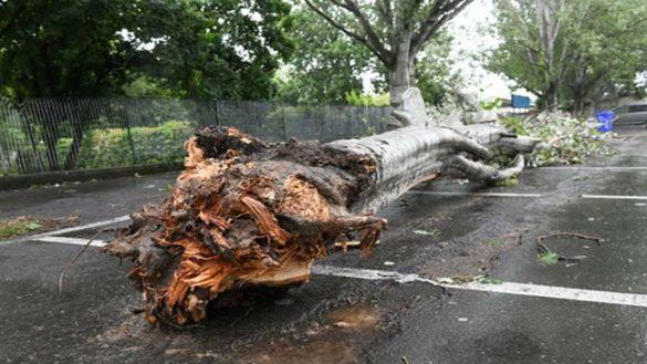 Abbattimento dei pioppi in viale Villetta, sostituiti con nuovi alberi