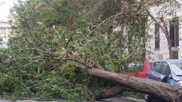 """Crollano gli alberi, nonostante il piano di manutenzione """"aggressivo"""" del Comune"""