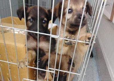 Lieto fine per i cagnolini abbandonati: hanno trovato famiglia