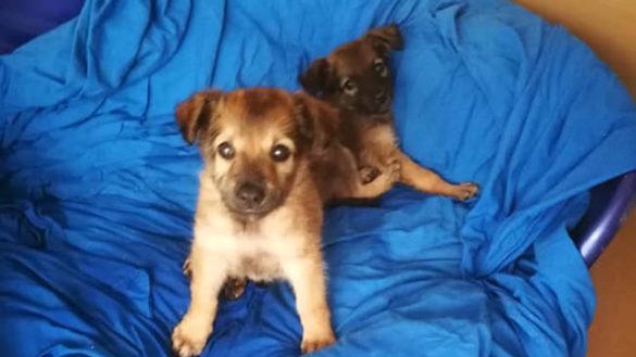 Traversetolo, cinque cuccioli di cane abbandonati sulla strada